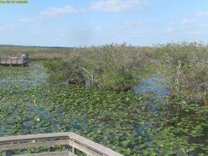 Everglades Webcam